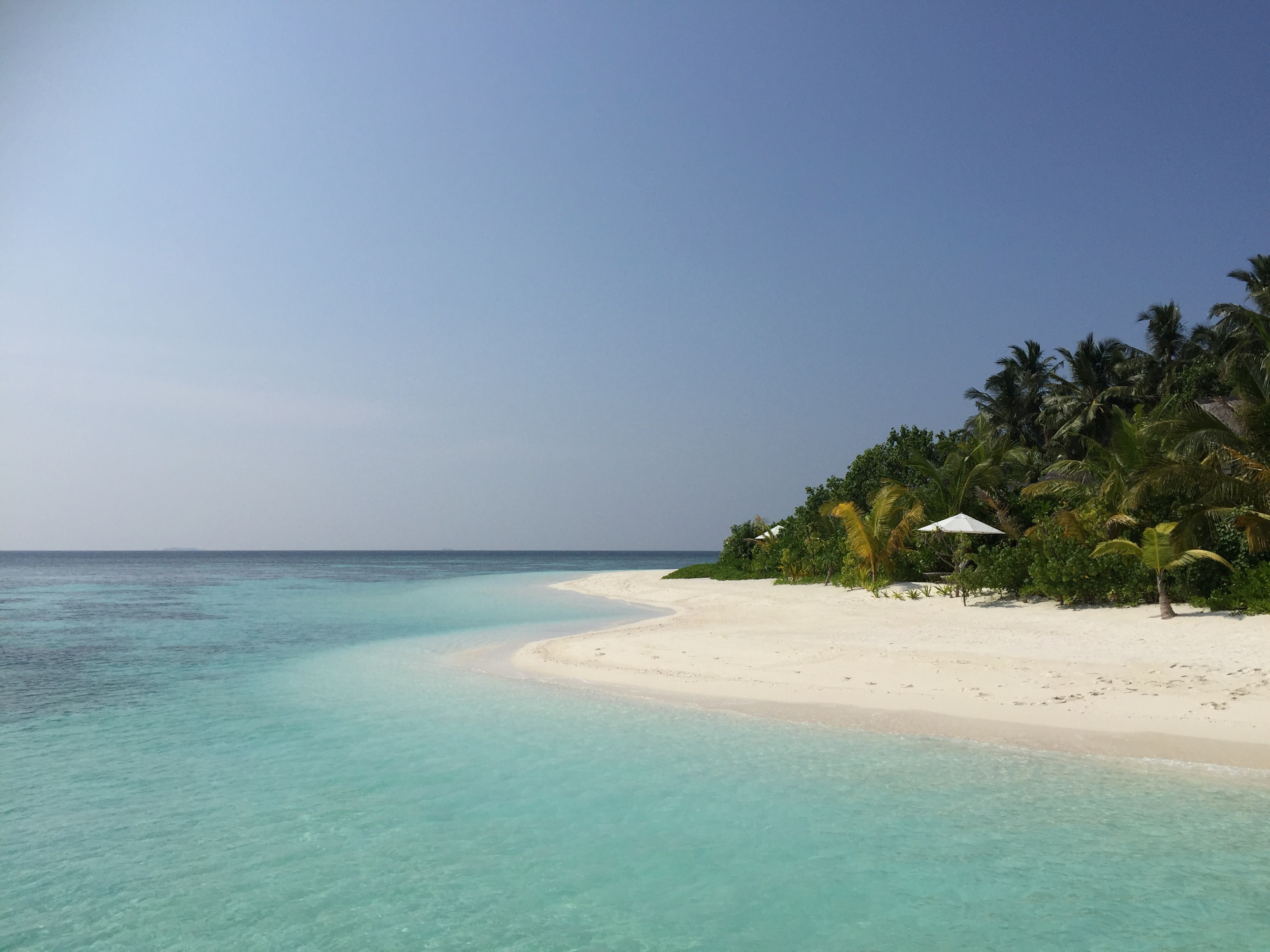 Tropical sandy beach by the palm tree forest