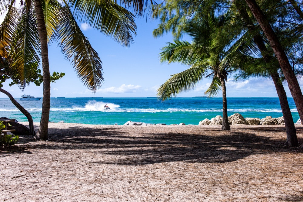 green leaf coconut trees on beach during daytime