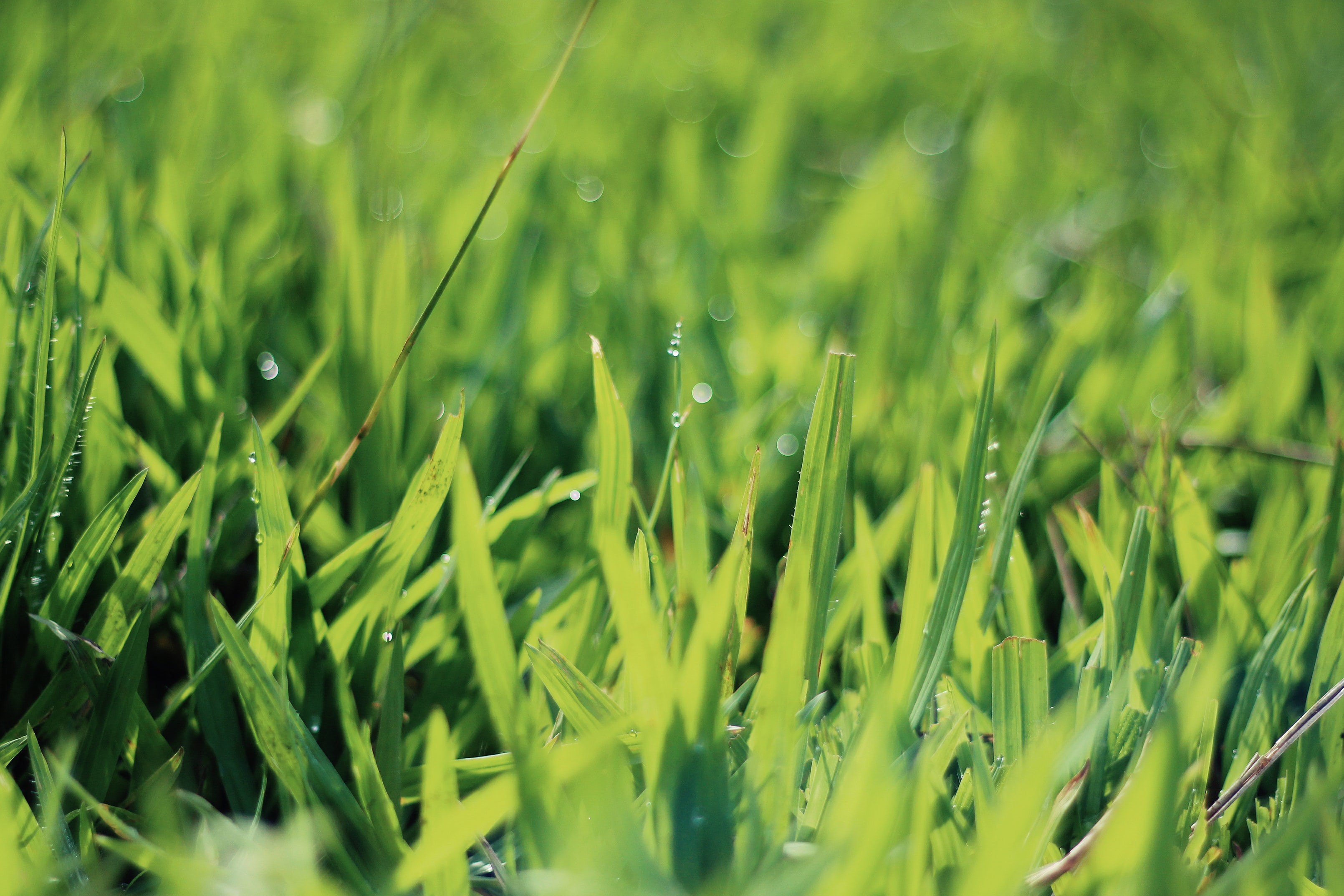 closeup photography of green grasses with water droplets