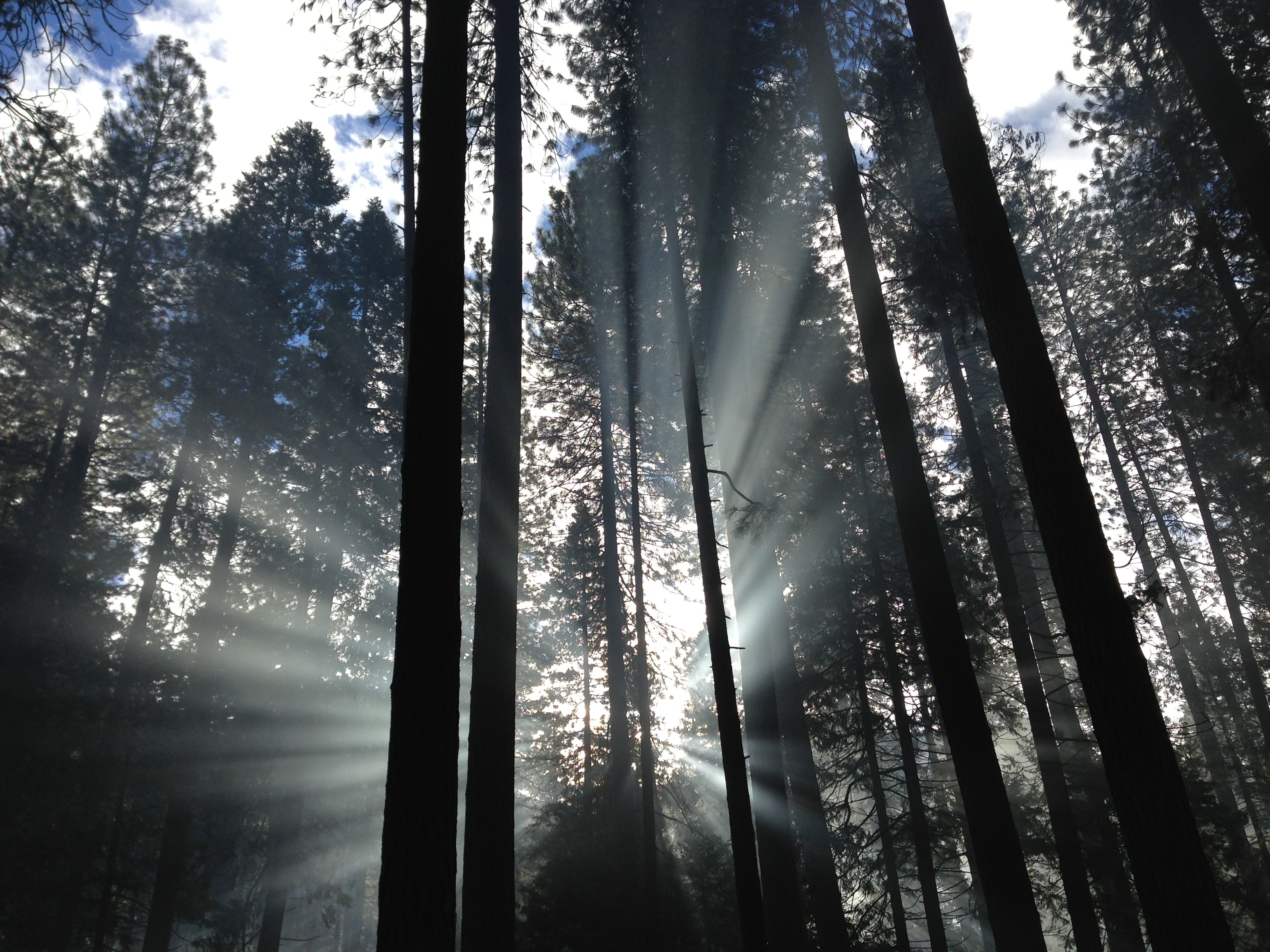 Morning sun breaking through the trees in Yosemite National Park