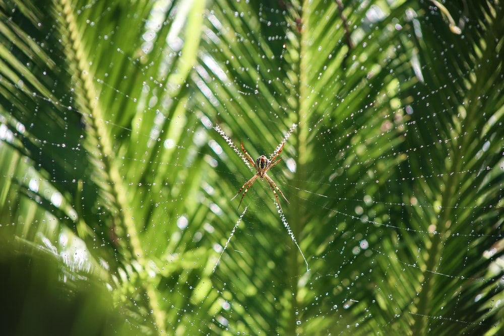 selective focus photography of brown spider