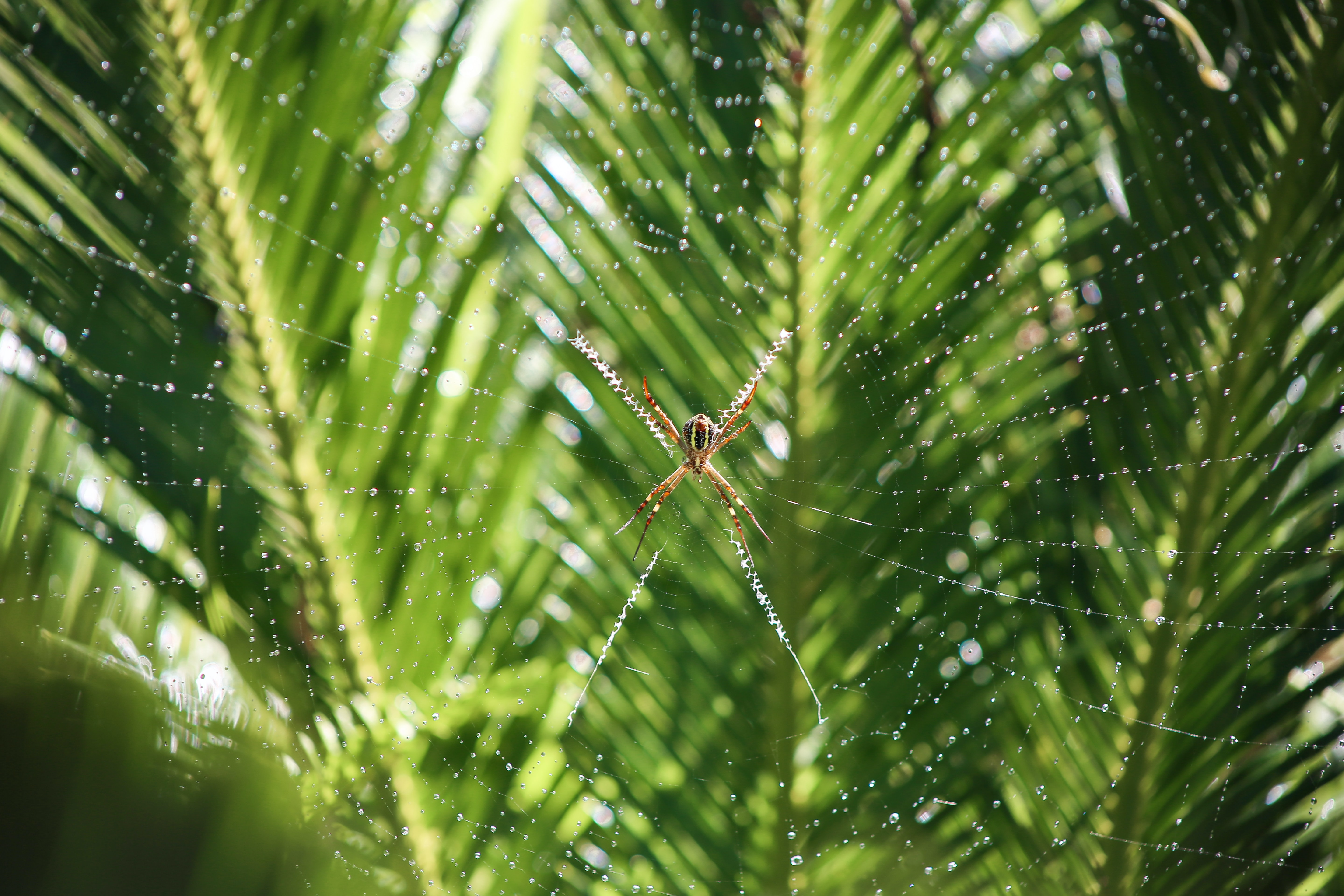 A spider sitting in the middle of a spiderweb against a green background