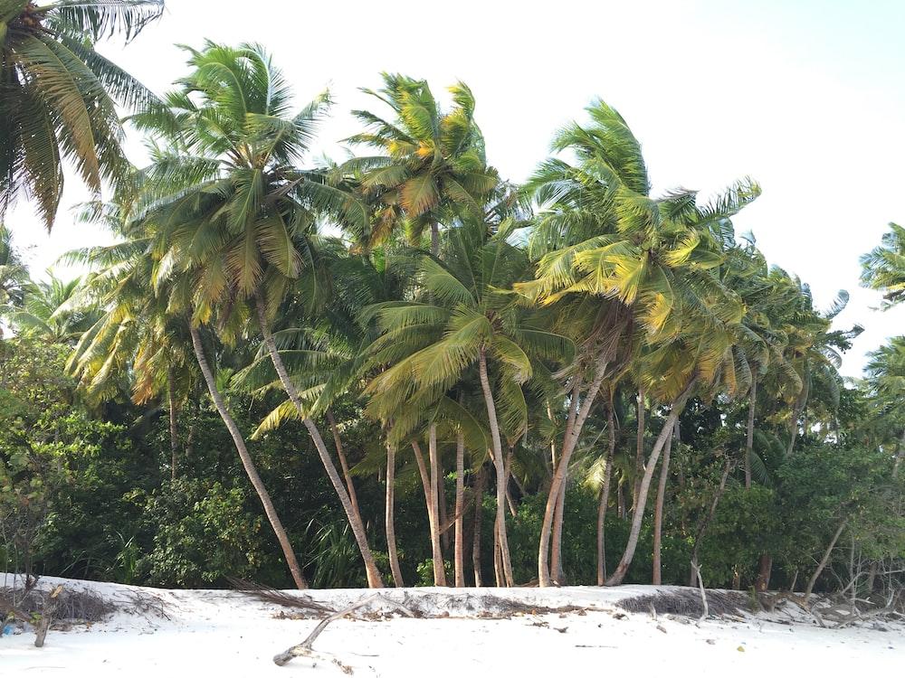 Palm trees on a beach on the coast