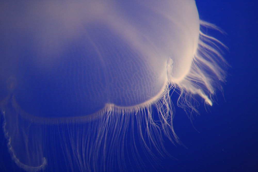 photo of white jellyfish underwater