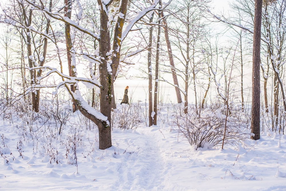snow on brown tree
