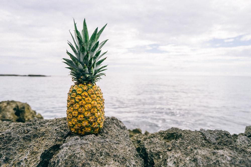 pineapple on gray rock near body of water