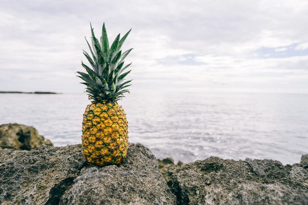 pineapple on gray rock near body of water