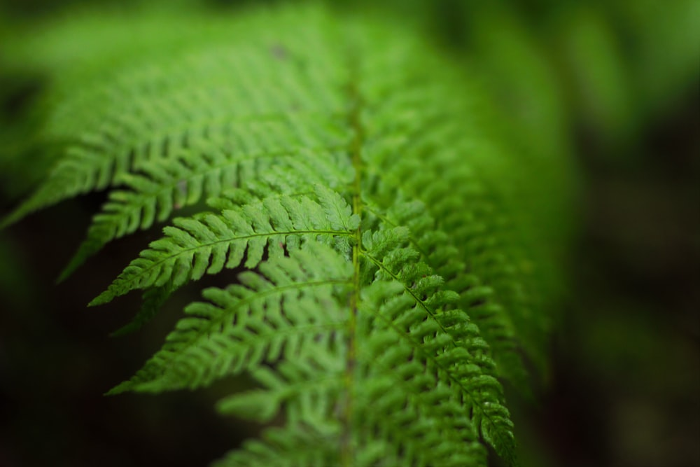 selective focus photography of green fern leaf