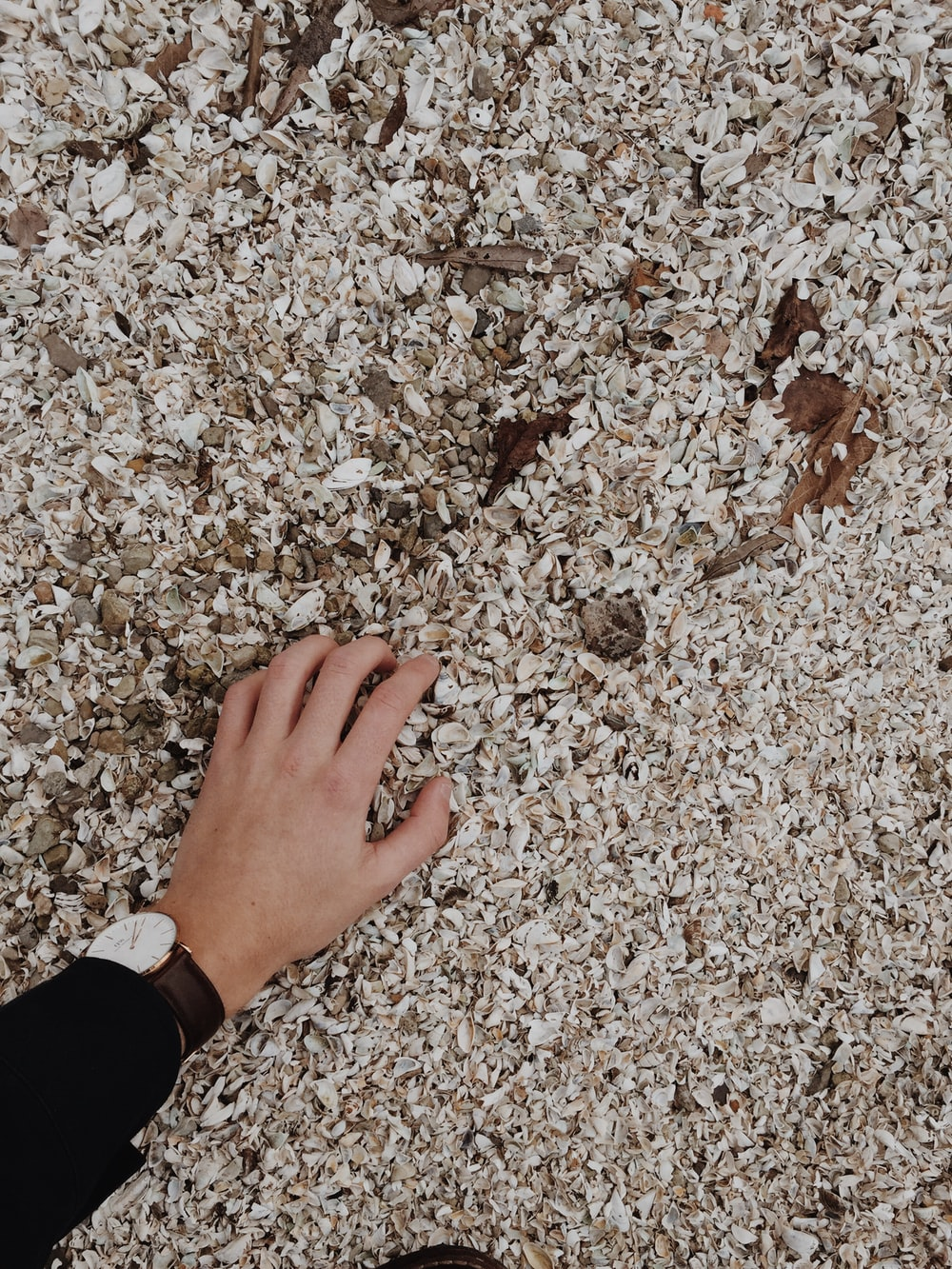 person holding white shell lot