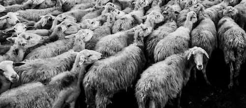 על מנהיגותו של נתניהו והפסיכולוגיה של ההמון