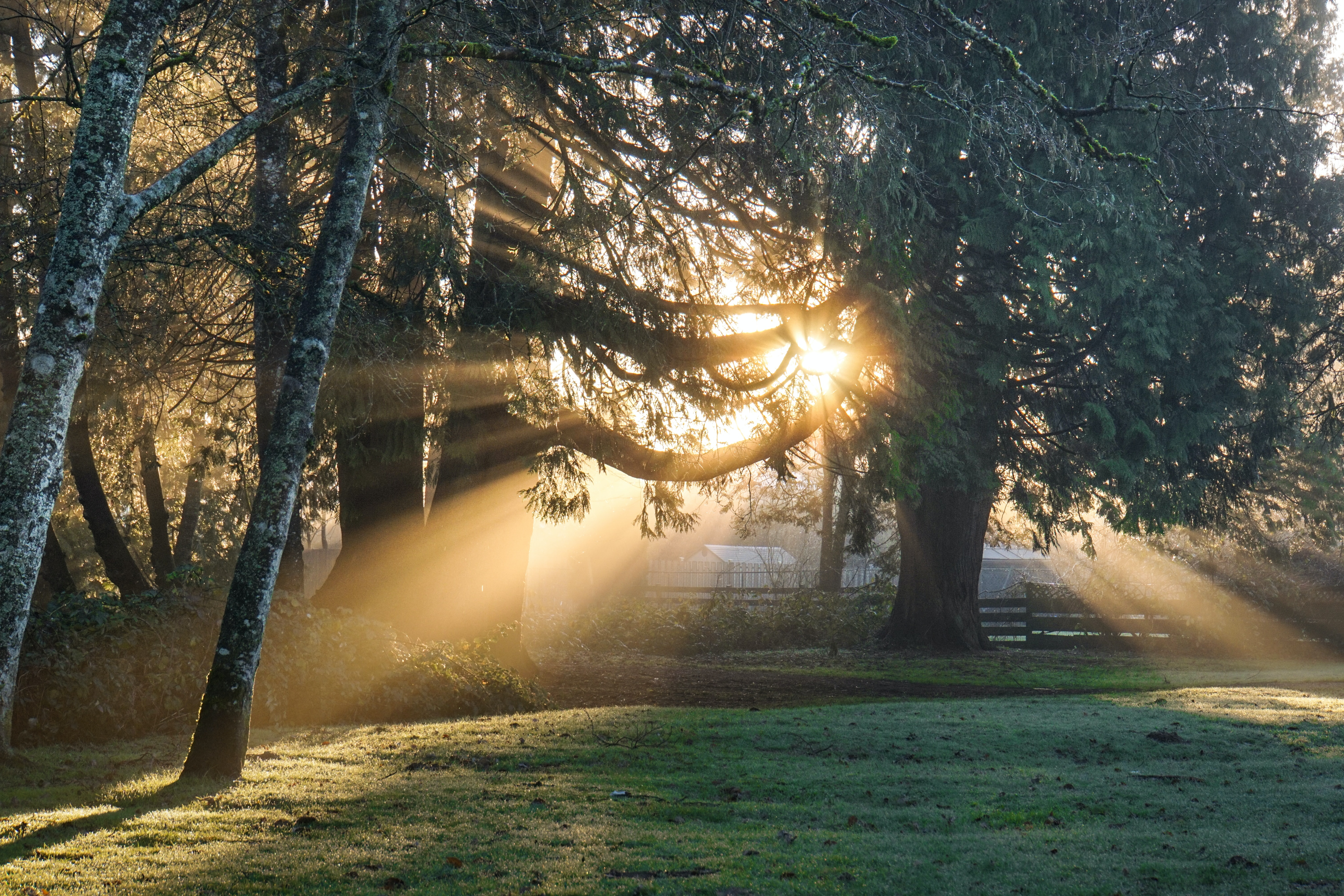 Sunlight shines through the trees in a park in Maple Ridge