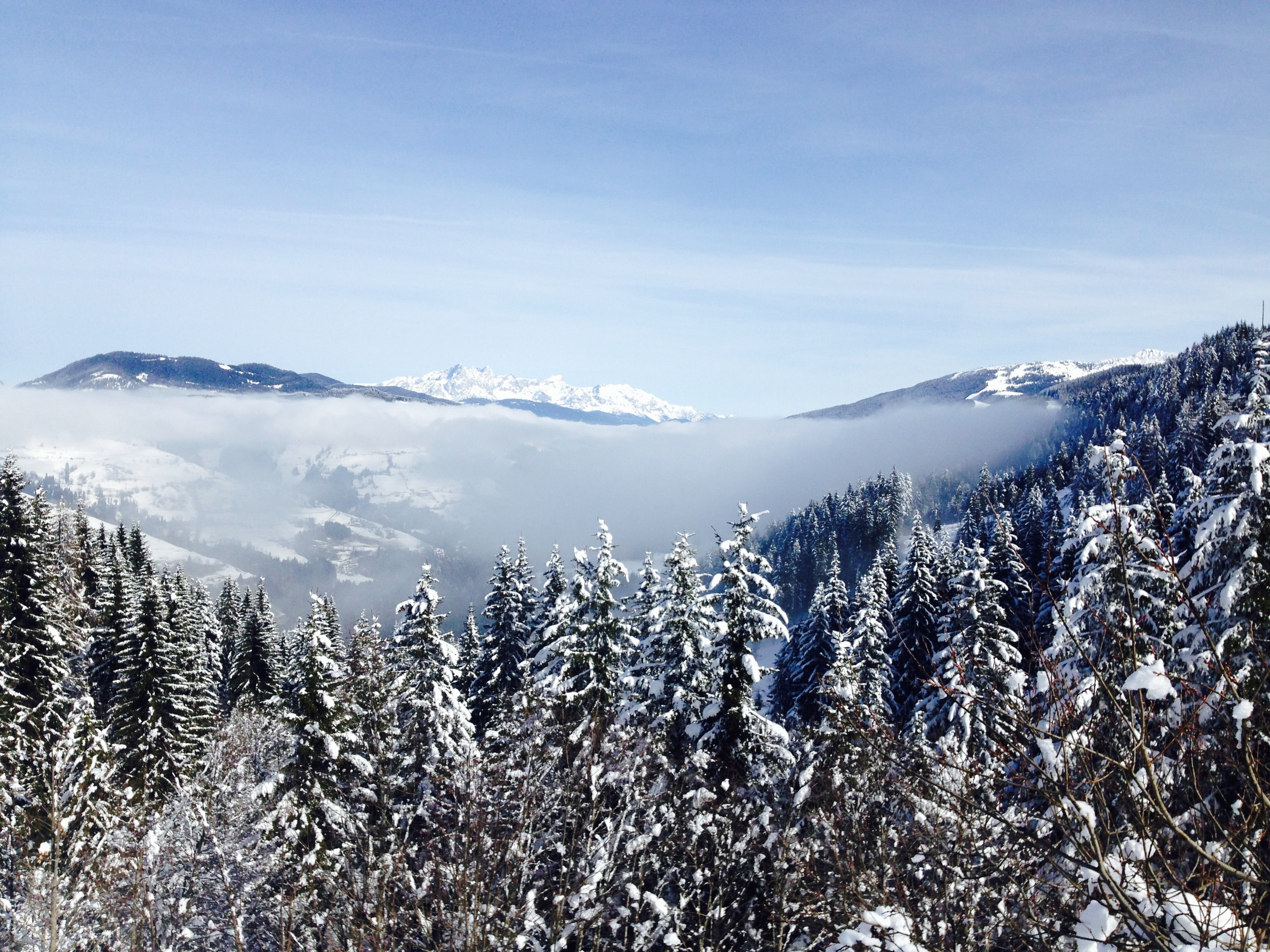 Overlooking a forest of snow covered trees and mountains in Austria.