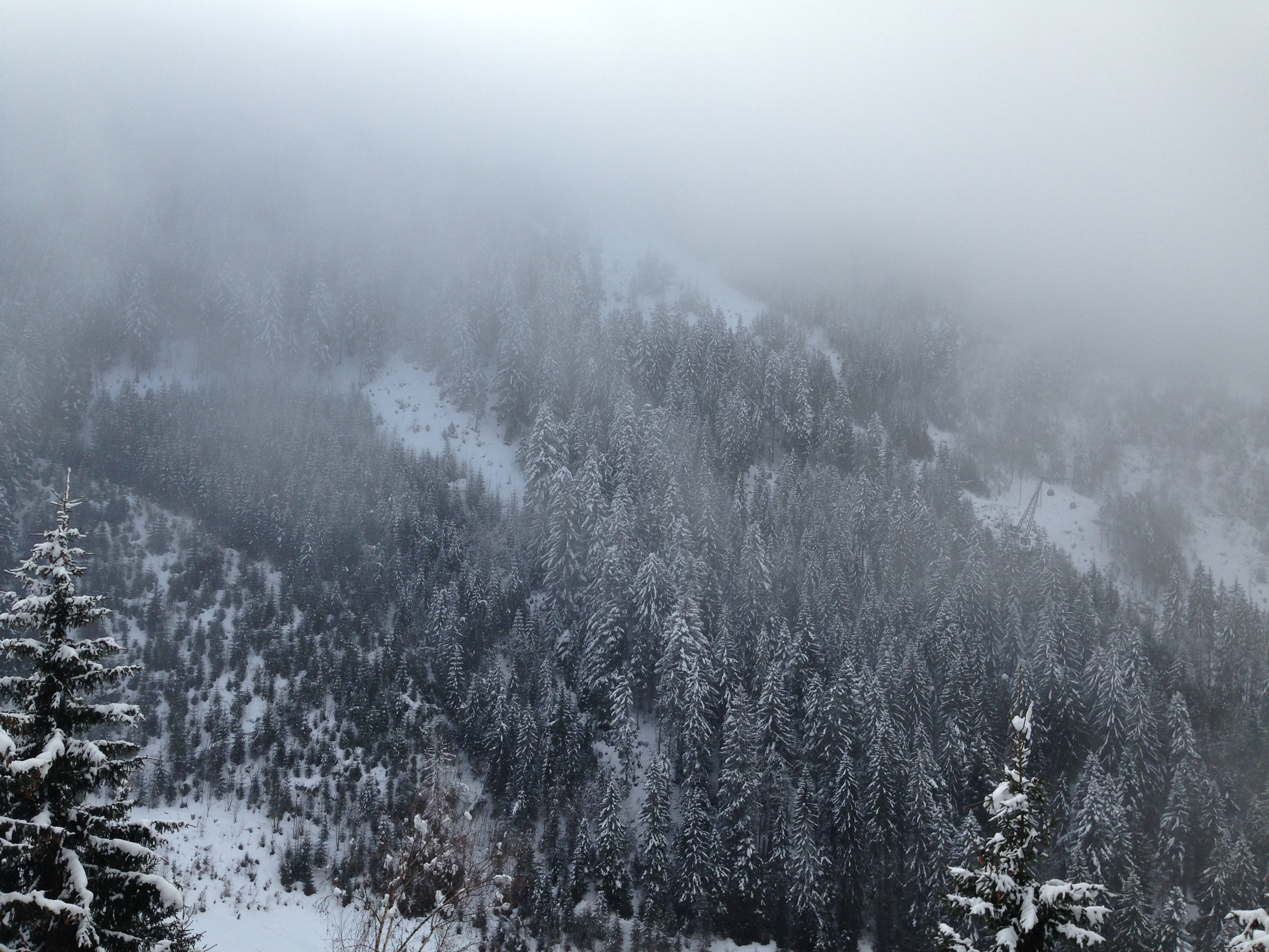 Fog covering an evergreen forest over a mountain slope