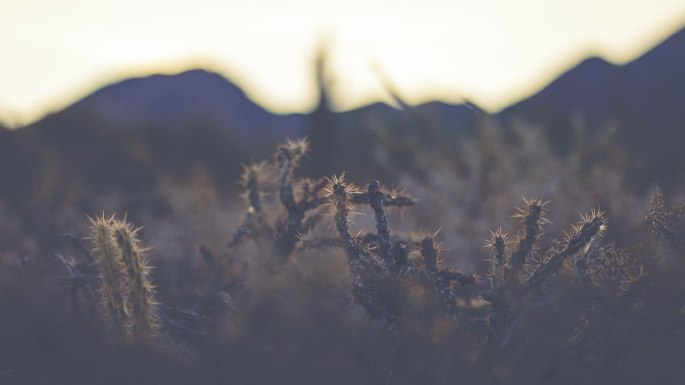 selective-focus photography of cactus