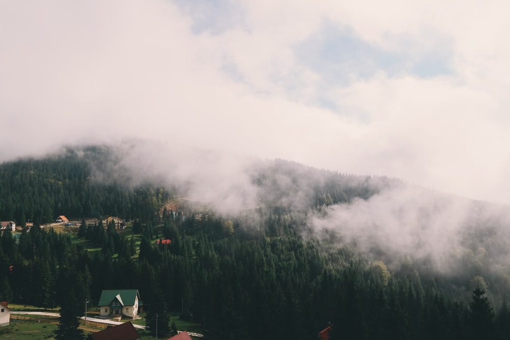 mountains covered with trees with fogs under cloudy skies