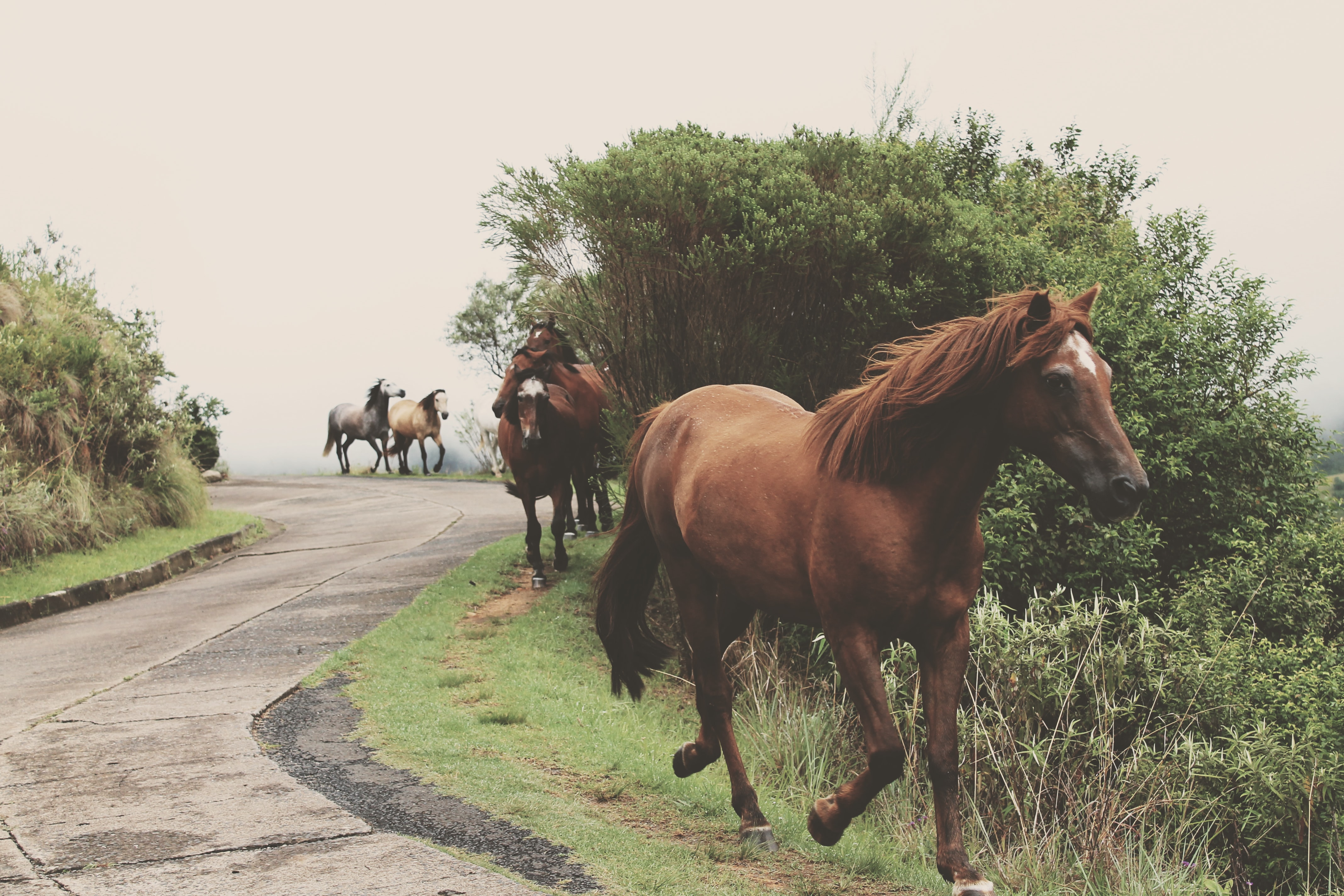 photo of running brown horses during daytime