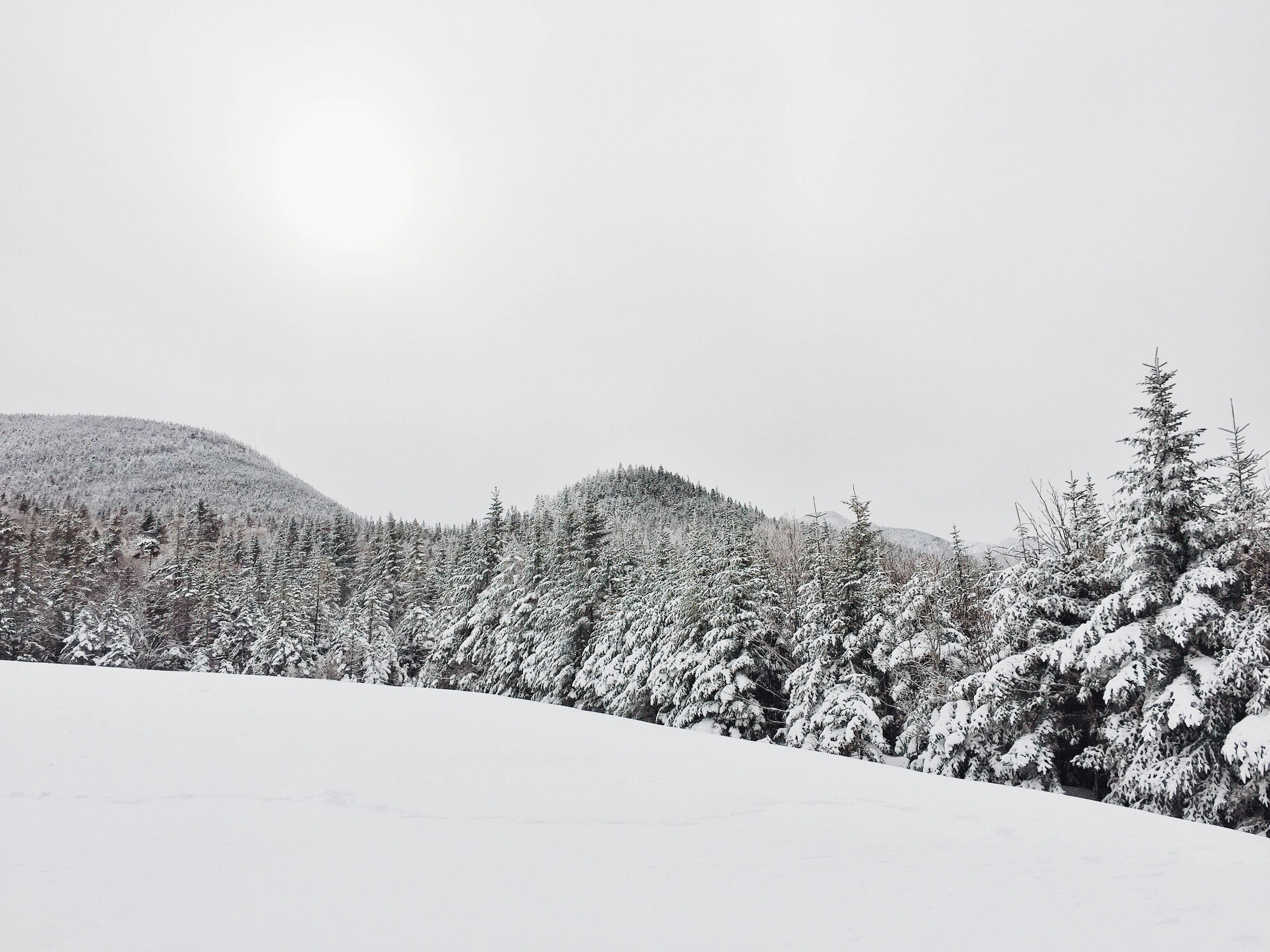 Snow covered hill and forest in gray scale.