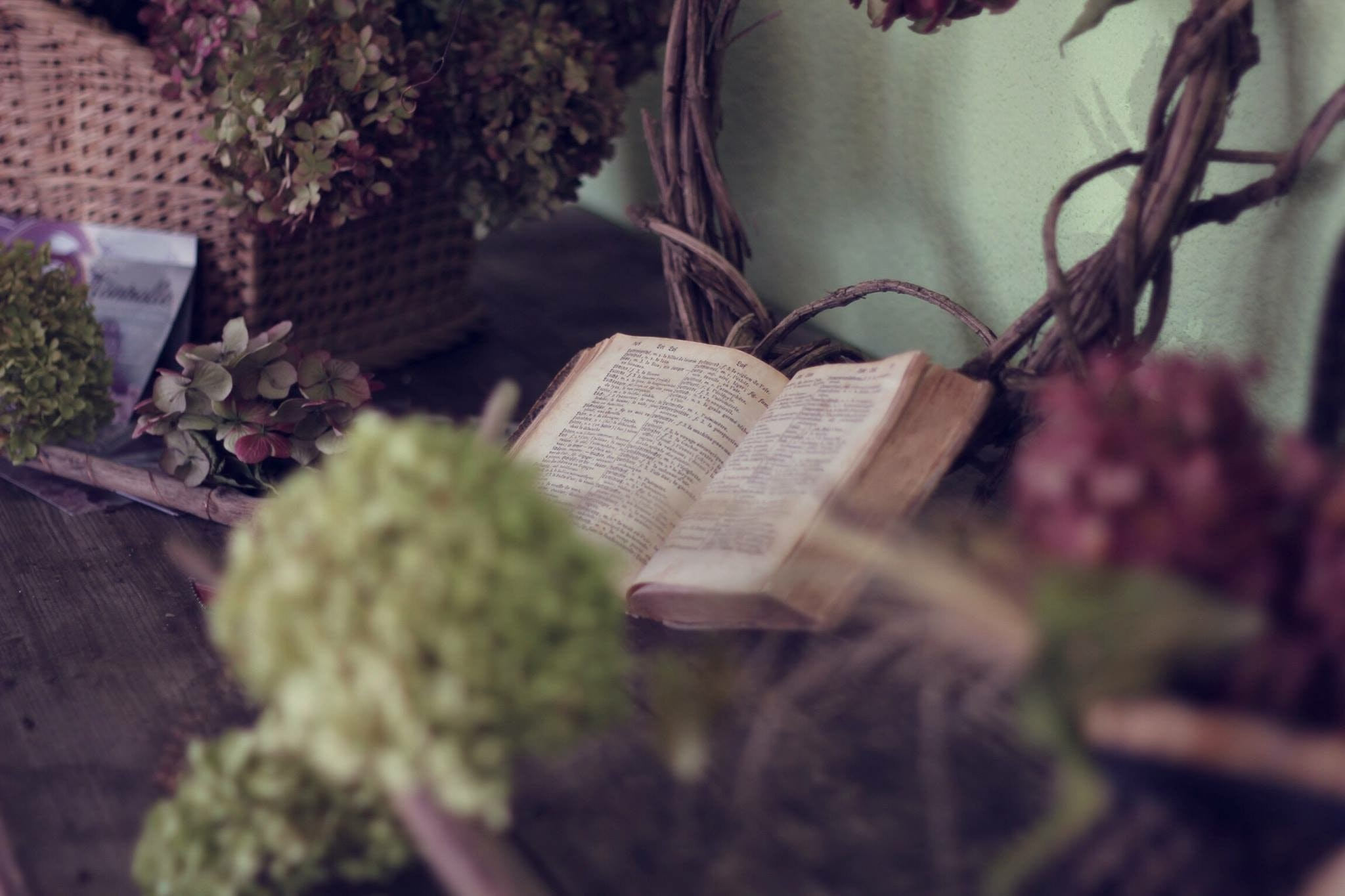 An open old book surrounded by hydrangea flowers in various colors