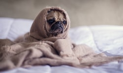 Can Dogs Have Cinnamon? What to Know About Cinnamon for Dogs