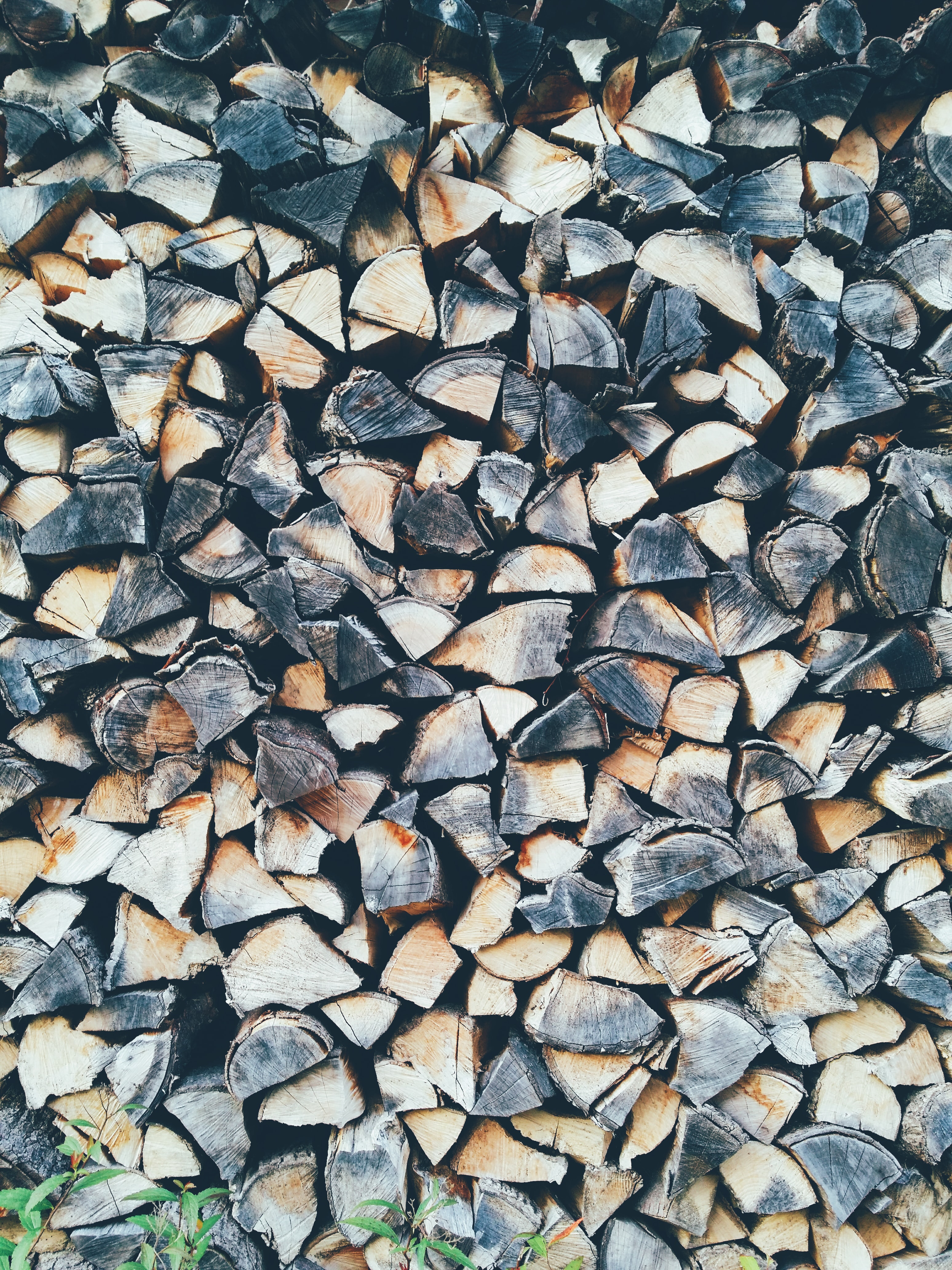 pile of cut woods