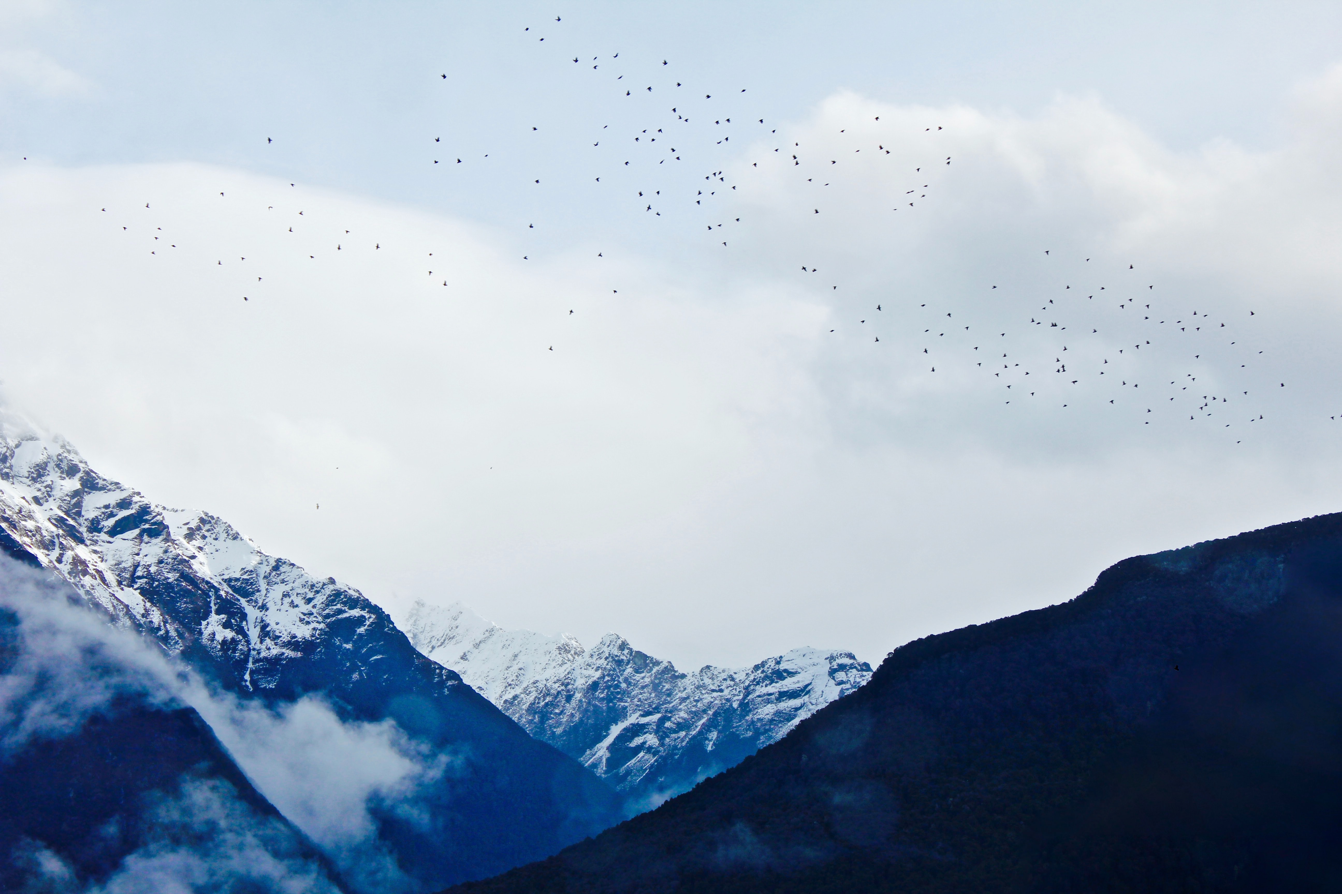 flock of birds flying above snow covered mountain during daytime