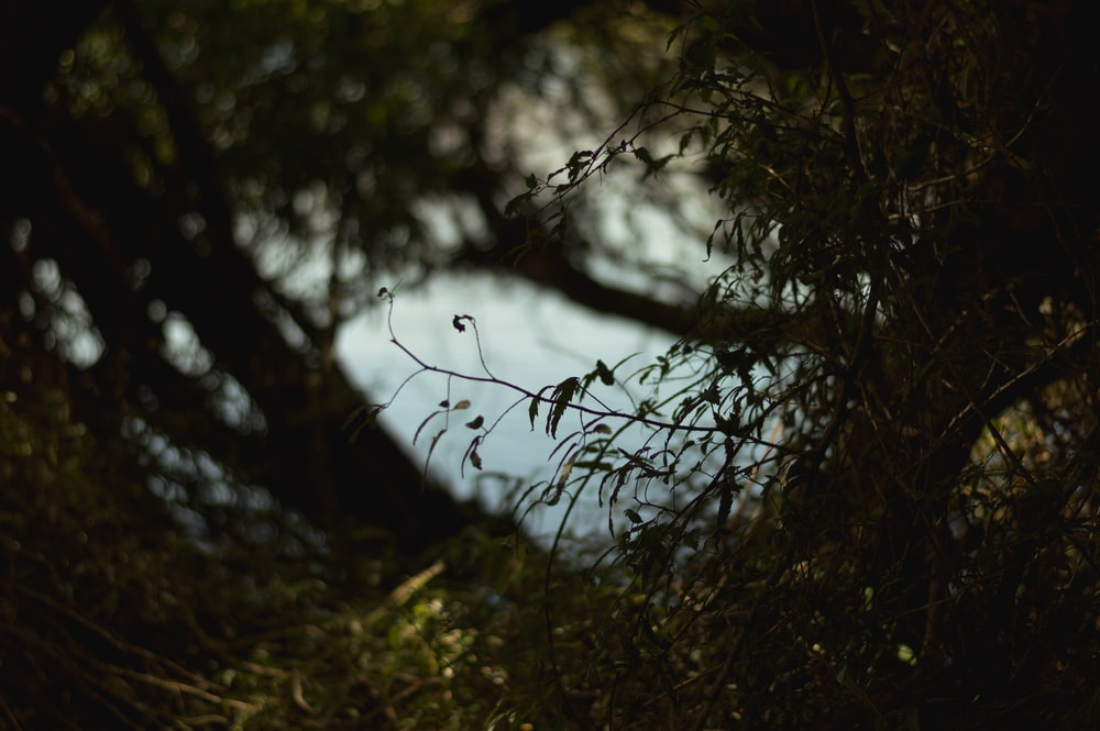 A view of the water from behind a tree inside a forest.