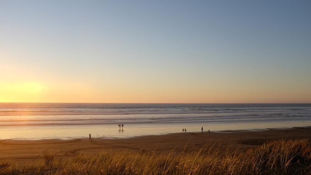 grass near sea during golden hour