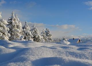 在蓝色的天空多云冰雪覆盖的树木