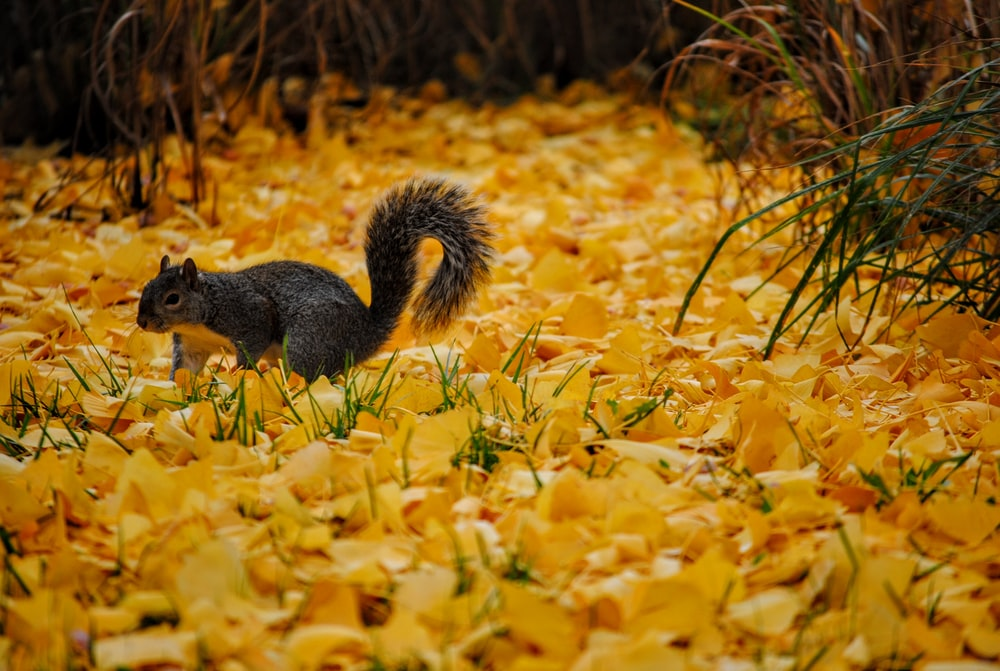 Squirrel on ground