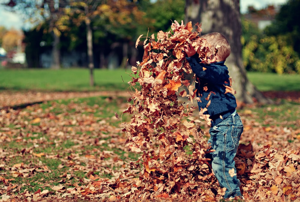 child playing with dried leaves