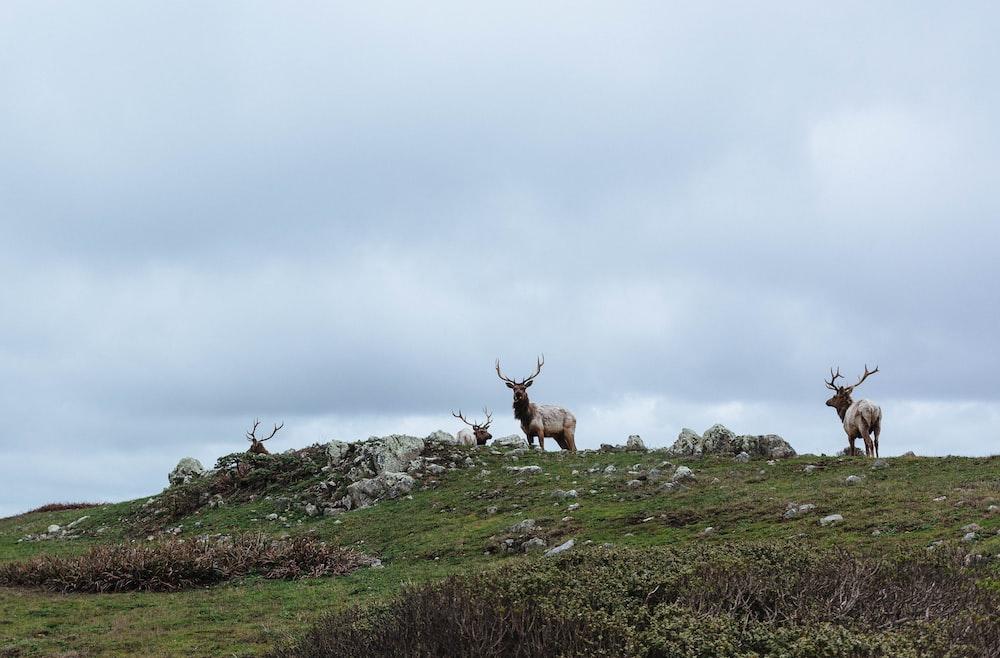herd of deer on green grass field