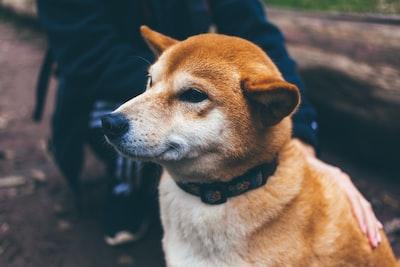 4440. Kutya