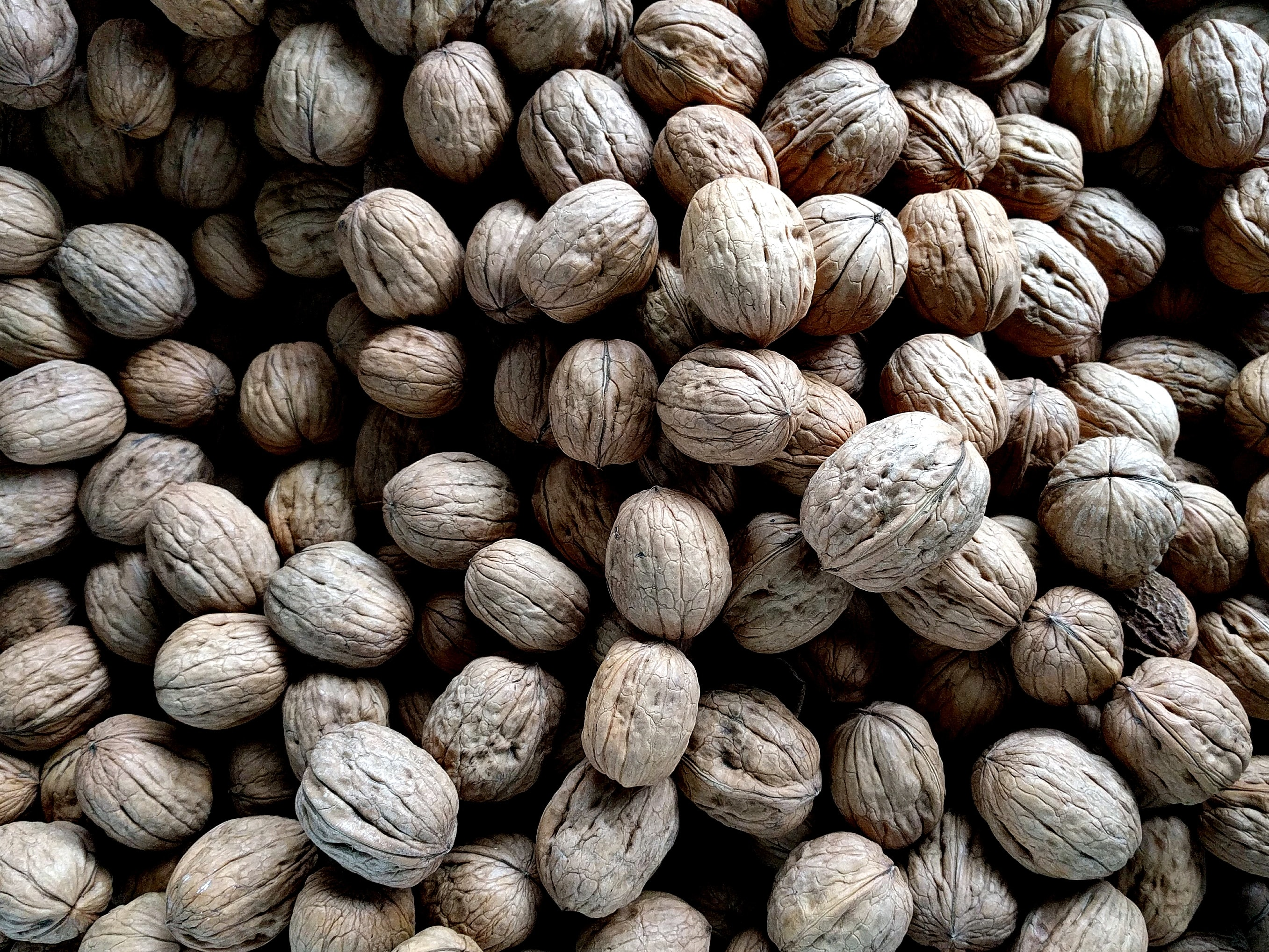 Basket of raw walnuts in their shell