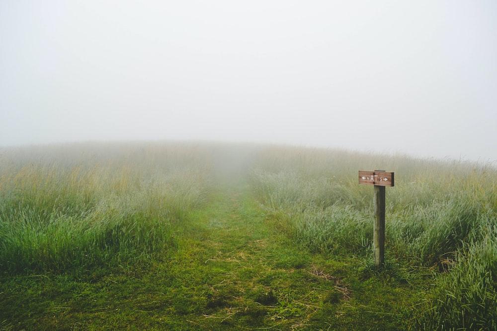 green grass field during fog