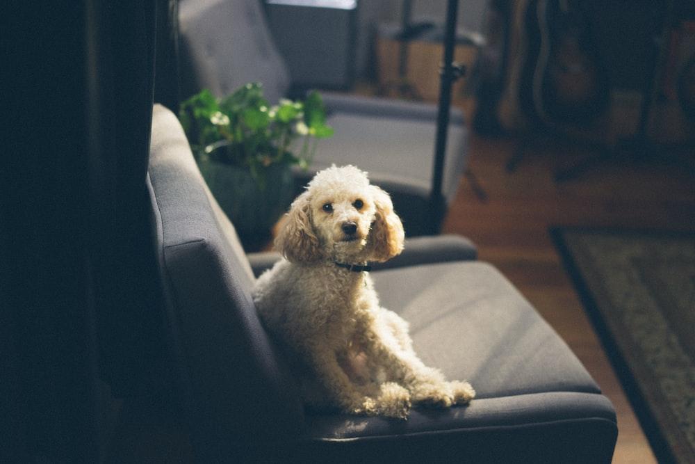 dog sitting on sofa inside room