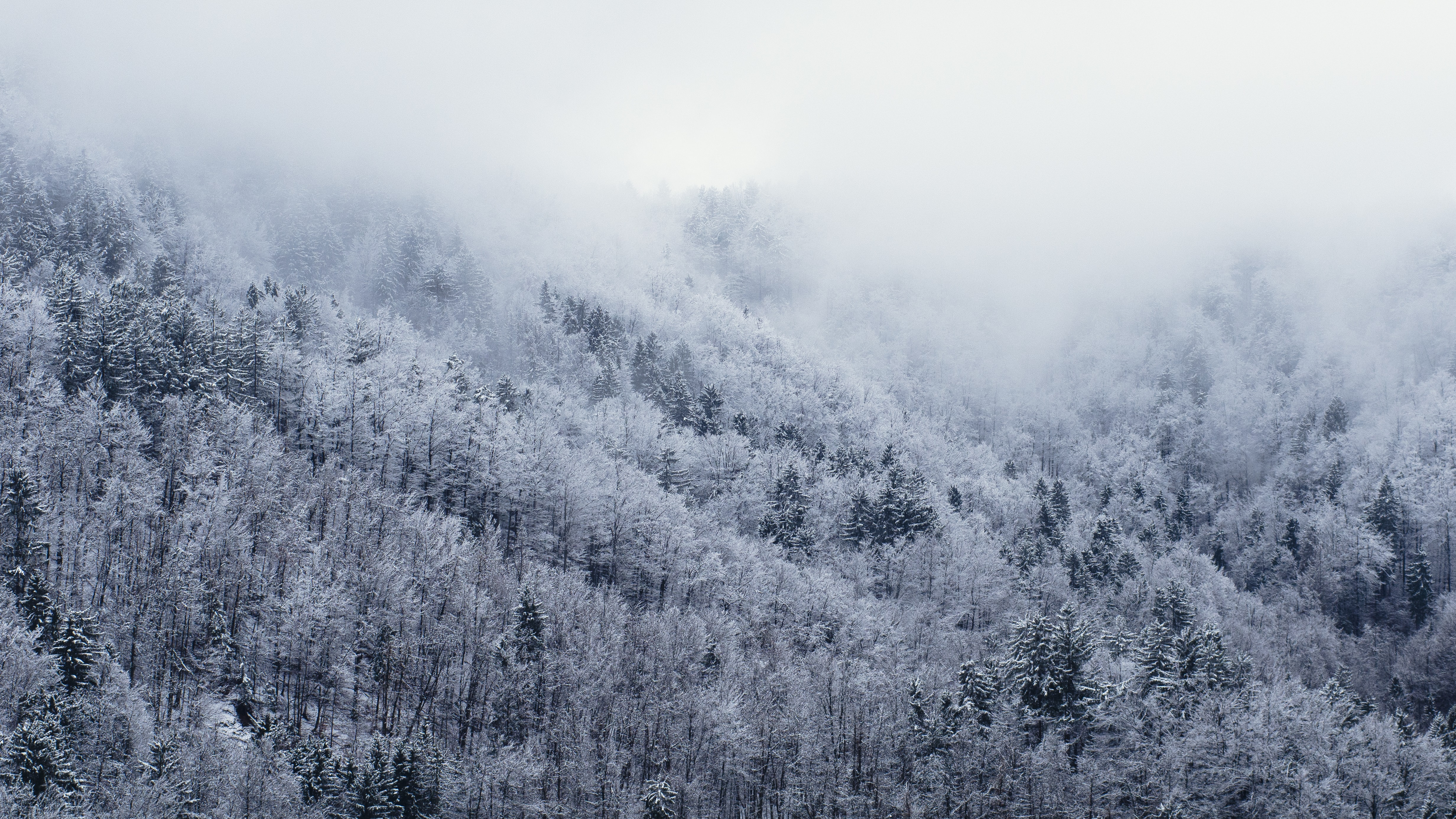 A forest landscape dusted with snow on a hill in the fog