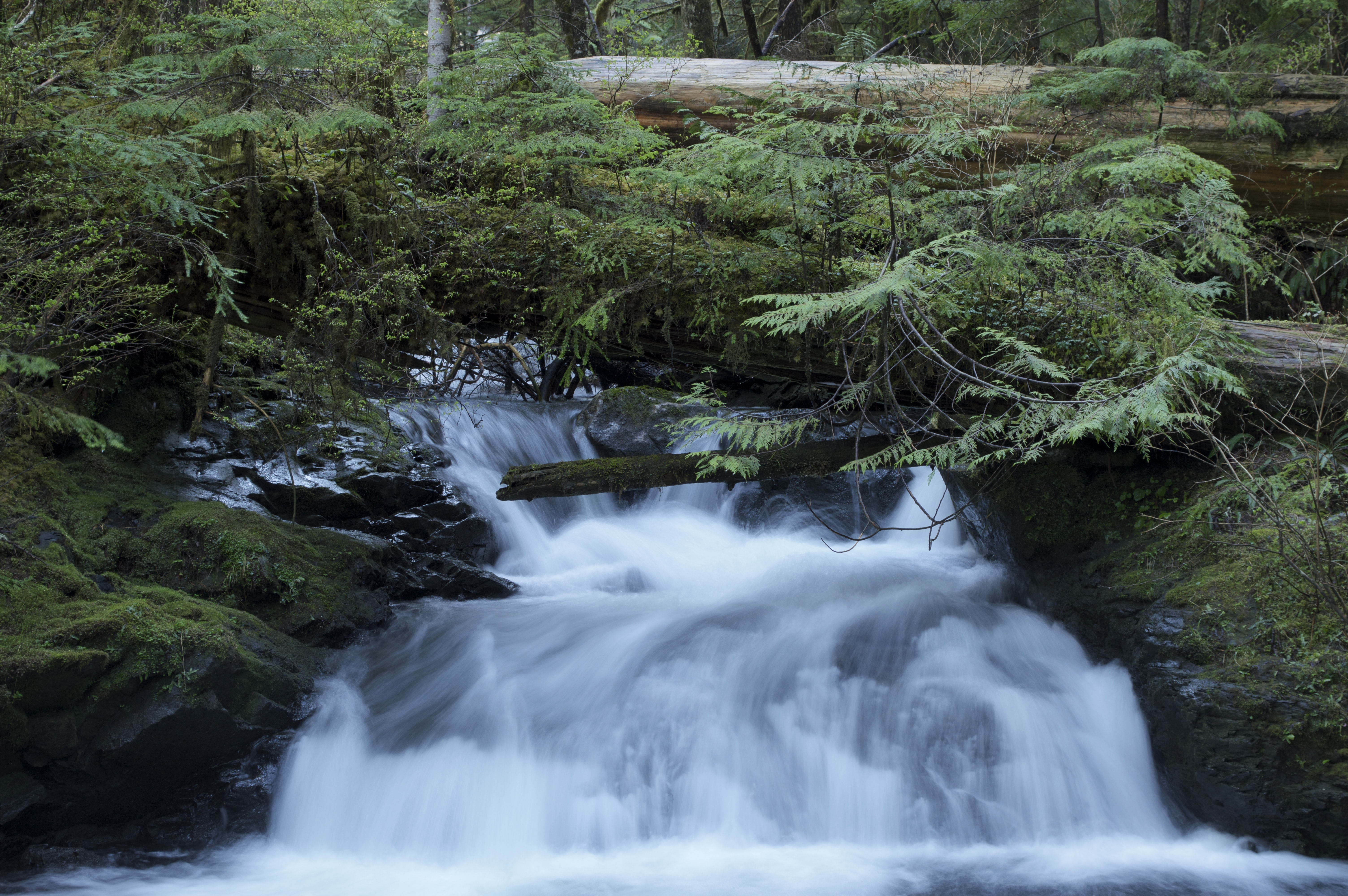 A small foaming waterfall splashing down the rocks in a forest
