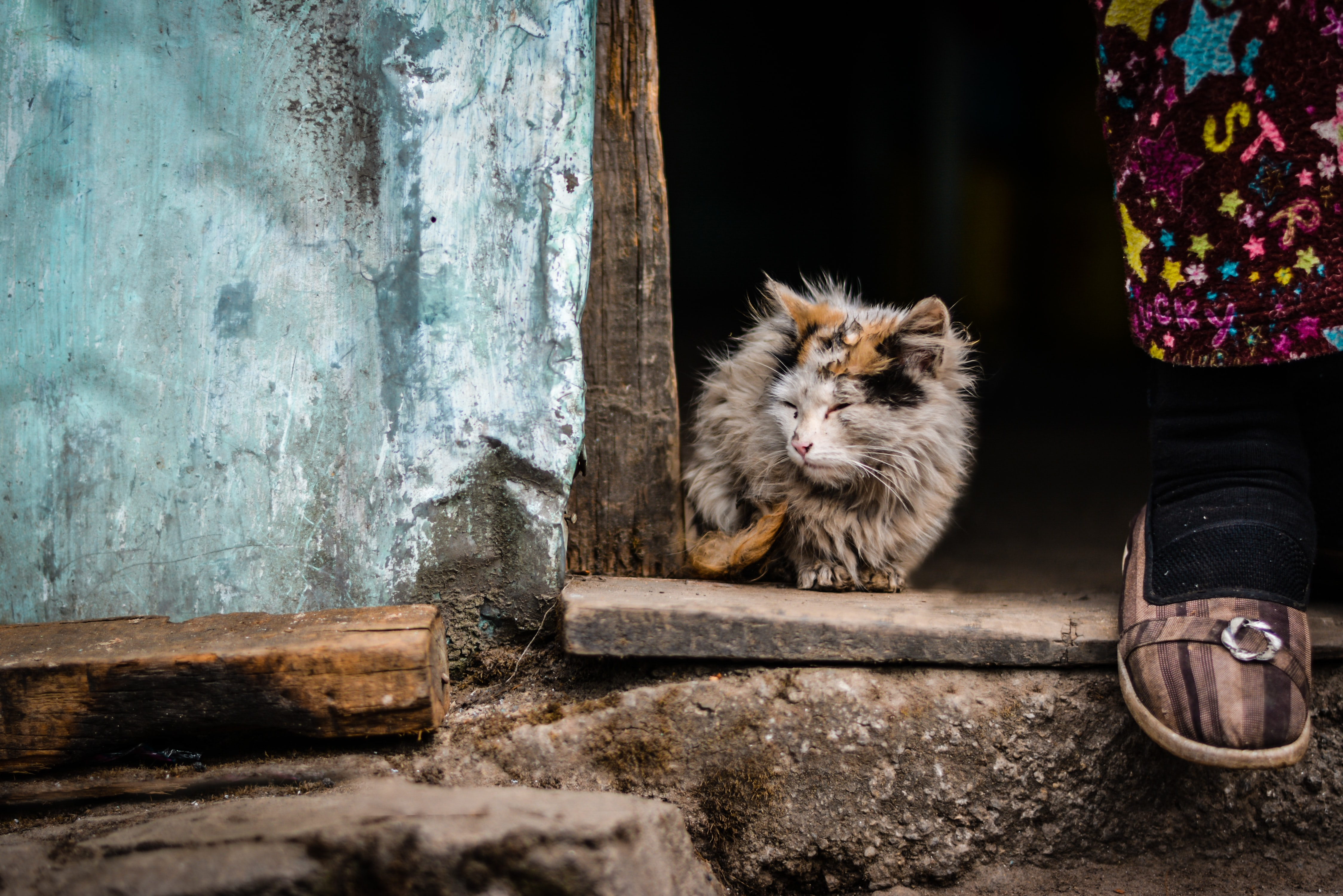A fluffy cat sitting on the threshold of an old house next to a person's foot