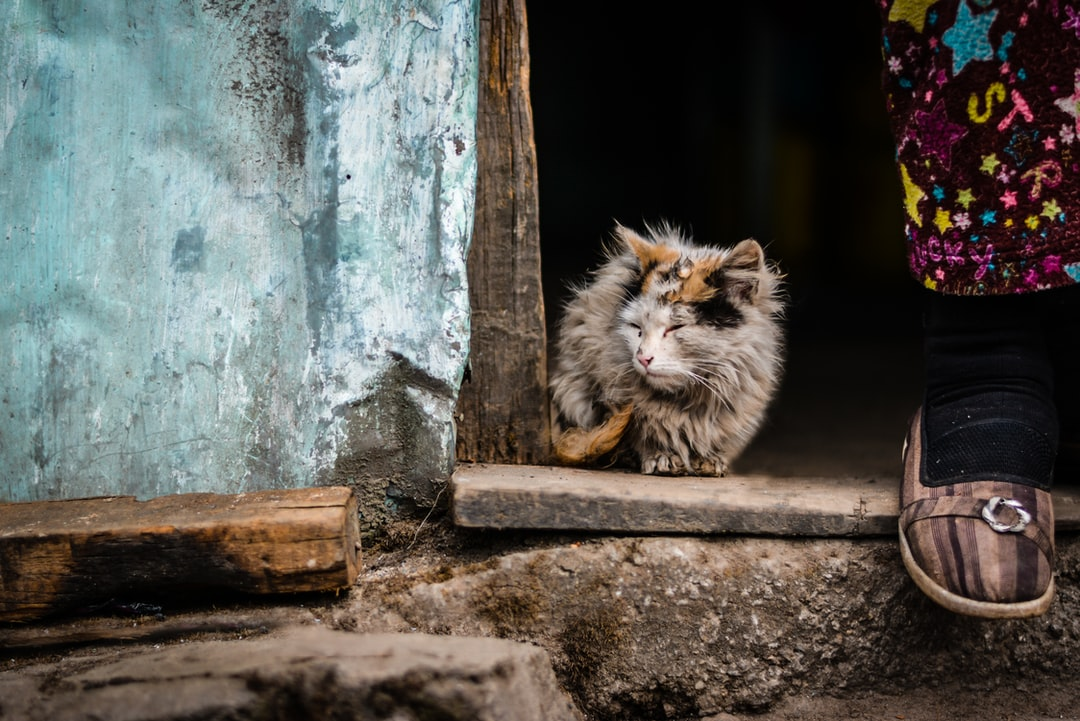 Furry alley cat