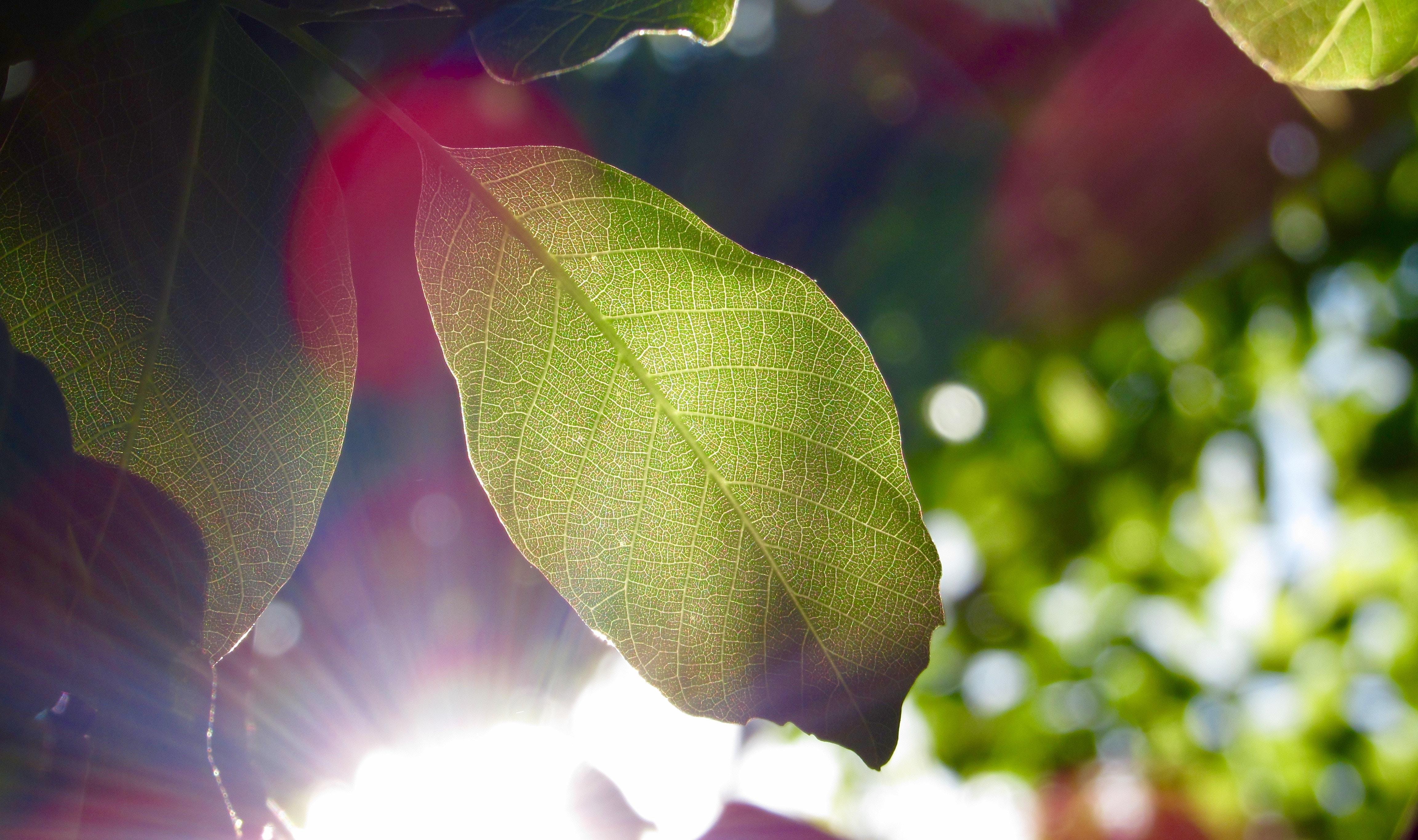 selective focus photo of green elliptic leaf