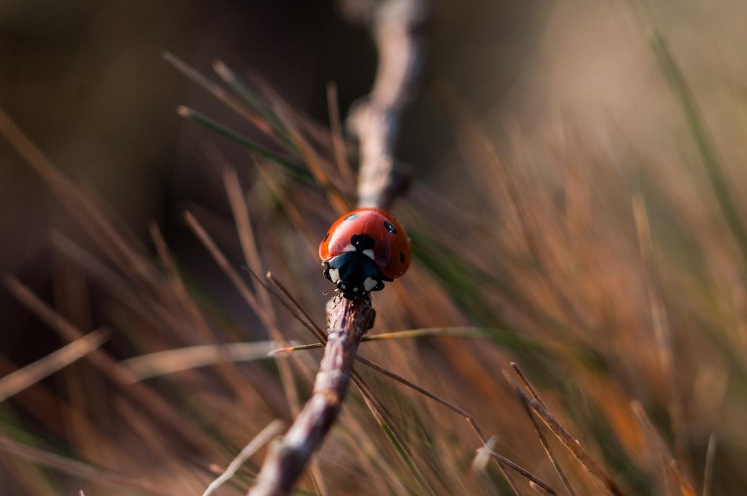 Ladybug On The Move