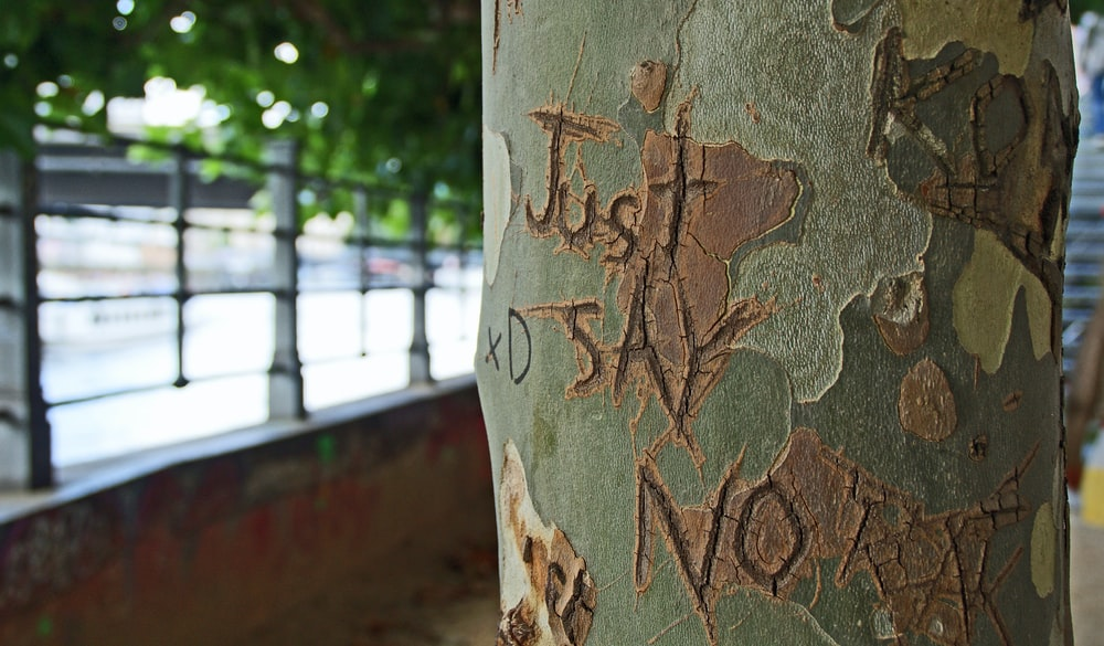 shallow focus photography of just say no carved on tree trunk