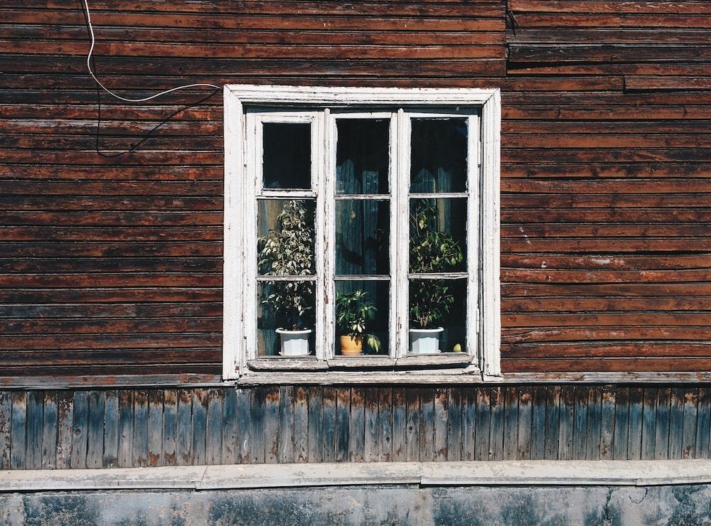 three plants on window panel
