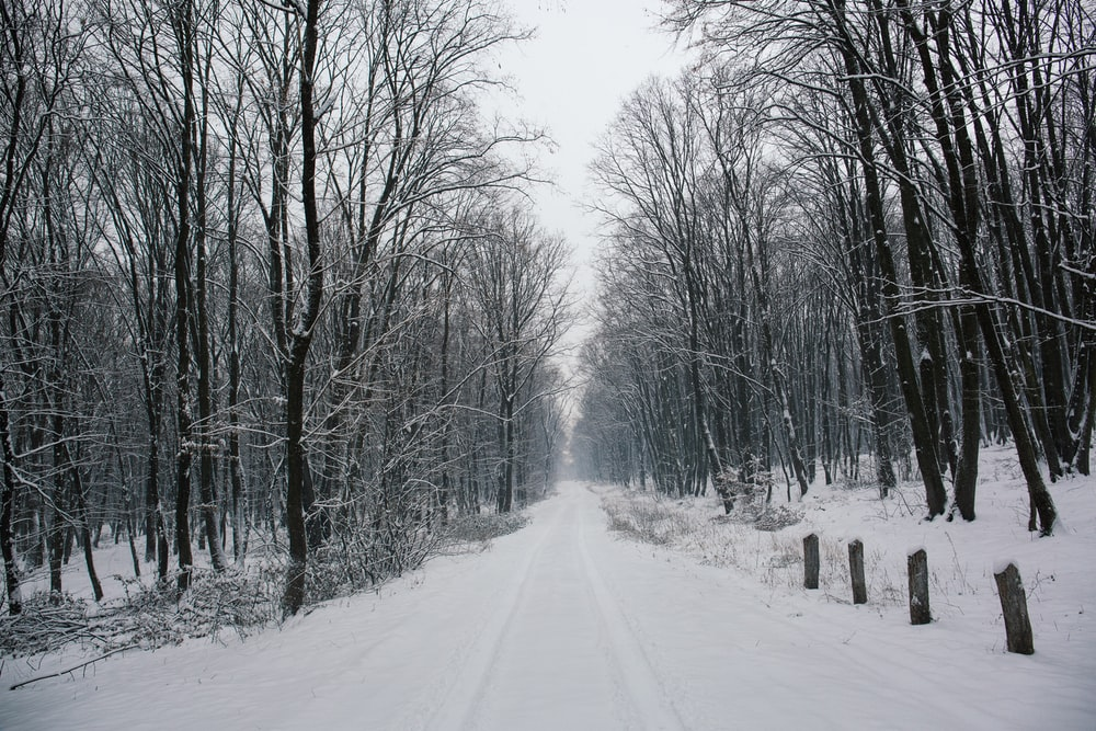 snow-covered walkway beside leafless trees