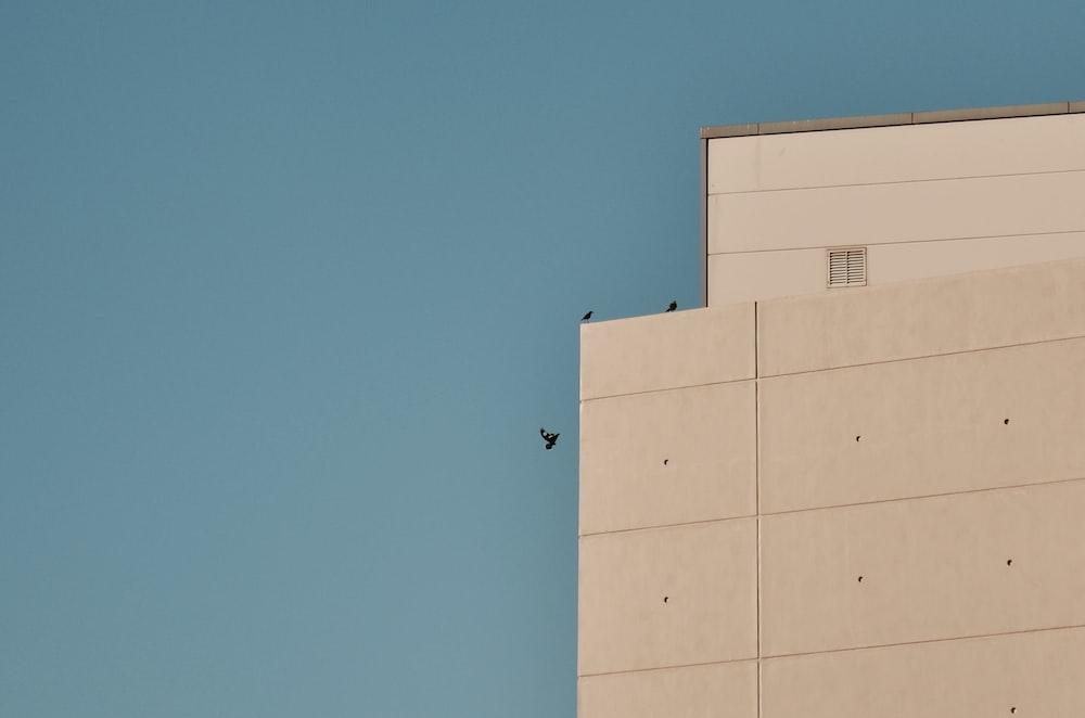 three birds beside building