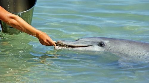 Shark Bay Marine Reserve, Western Australia
