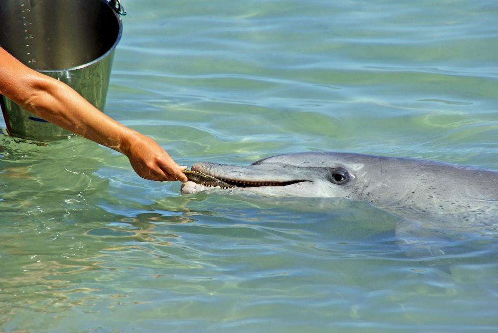 person feeding gray dolphin