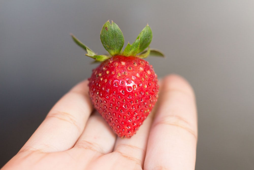person with red strawberry fruit on hand