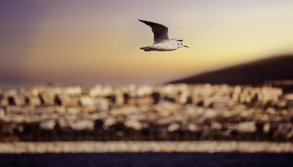 white seagull soaring in sky at daytime