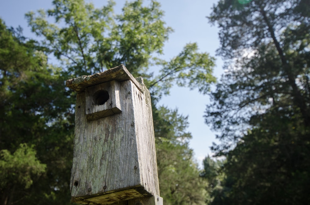brown wooden birdhouse